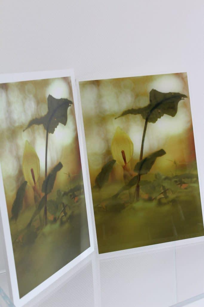 Foto-Digitaldruck auf PLEXIGLAS® - hochwertig und detailecht.